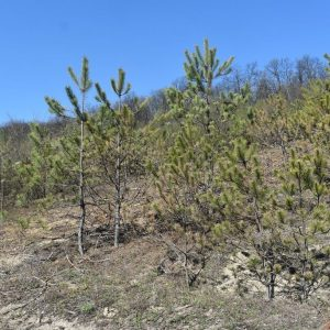 """В Седмицата на гората Кметът Денчо Бояджиев и Добрин Добрев посетиха новозалесени от ОП """"Разградлес"""" площи"""
