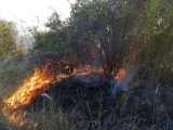 Пожар лумна над парка в Разград